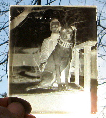 Victorian Dog Wearing Amazing Studded Collar / Antique Glass Photograph