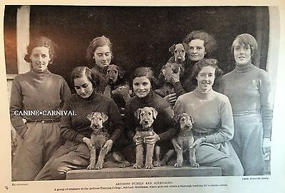 Airedale Terrier Dog Student &  Dogs Ardcross College Photo 1934 Vintage Print