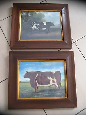 "0ld style cow & bull prints in frames approx.  14"" x 16"""