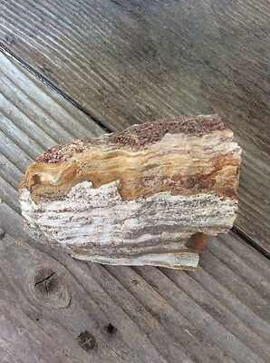 """Petrified Wood 3-3/4"""" By 2-1/3"""" By 1"""""""