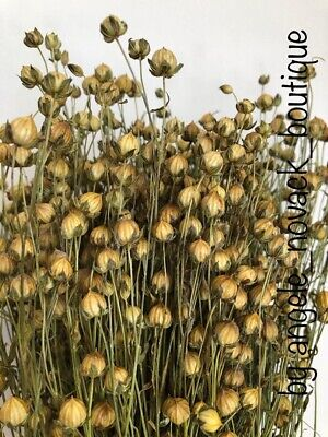 """100 Stems Dried Flax For Flower Arranging Ready To Use Rustic Harvest 18"""""""