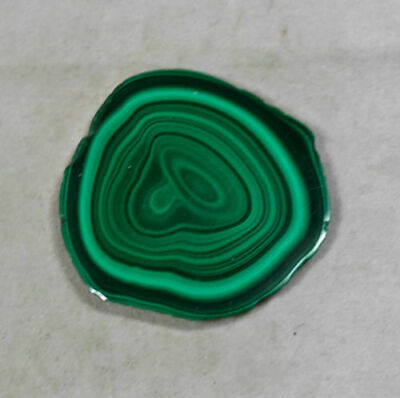 4cm MALACHITE Stalactite Slice from the Congo, Africa 22619