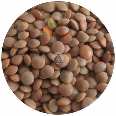 Whole Red Lentils (Masoor) - 1Kg