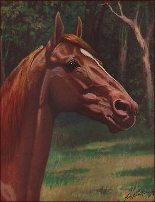 MAN O WAR 1952 George Ford Morris FAMOUS RACE HORSE THOROUGHBRED  RACING SIRE
