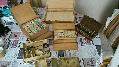 Microscope slides in antique wooden boxes