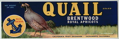 QUAIL Vintage Brentwood California Apricot Crate Label Bird, *AN ORIGINAL LABEL*
