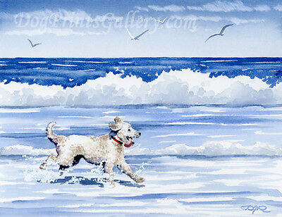 """""""Labradoodle at the Beach"""" Art Print Signed by Watercolor Artist DJ Rogers"""