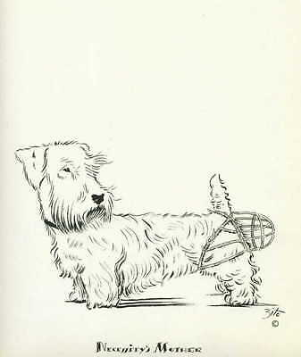 VINTAGE Dog Print 1937 Sealyham Terrier wears Muzzle on the Wrong End