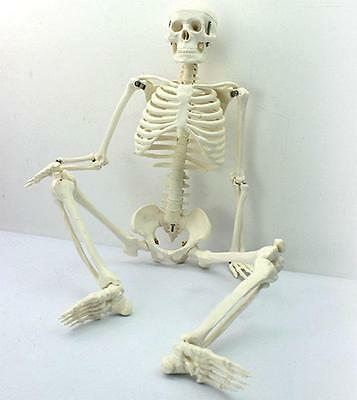 1x Human skeleton anatomical model Life Size 45cm medical + poster + bonnet M3