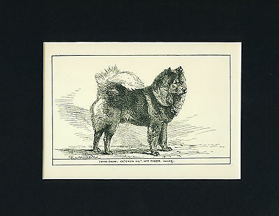 Dog Art Print 1900 Chow Chow Dog ANTIQUE