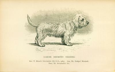 ANTIQUE Dog Print 1897 Dandie Dinmont Terrier Dog named SHAMROCK