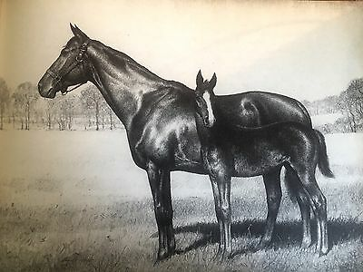 Vintage ART 1945 Print CW ANDERSON Thoroughbred MARGUERITE MOTHER OF GALLANT FOX