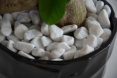 1 kg Decorative Natural Stones Pebbles CARRARA SNOW WHITE *** HOME & GARDEN ***