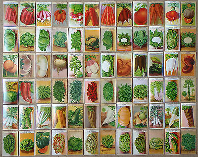 1920's 72 Genuine vintage French vegetable seed packet labels all different