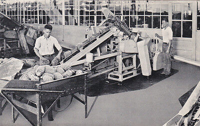 Workers , Dole Pineapple Cannery , Hawaii , 20-40s