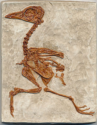 Well Detailed Complete Fossil Bird