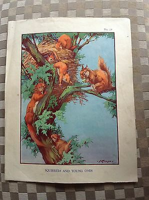 Vintage Macmillan School Poster Squirrels And Baby Squirrels 1950's