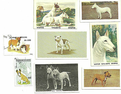 Vintage Bull Terrier Pit Bull Staffordshire Trade Card Stamp Collection