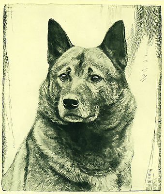 Dog Art Print 1935 Norwegian Elkhound Dog Vintage