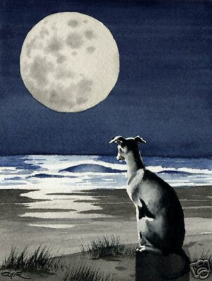 GREYHOUND Watercolor Painting DOG 8 x 10 Art Print Signed by Artist DJR