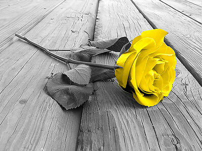 """YELLOW ROSE FRAMED CANVAS PICTURE PRINT FLOWER A1 30"""" x 20"""" inch"""