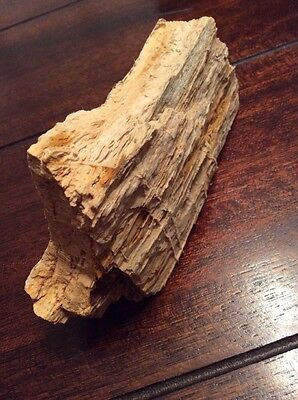 """Petrified Wood 5"""" By 2-1/2"""" By 1-3/4"""""""