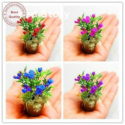 100 Seeds / Packing New Rose Seeds 4 Different Colors Rare C-c Rose Mini Bonsai