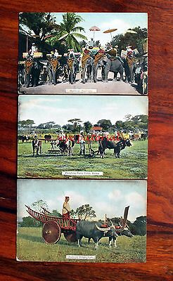 Burma  Myanmar 3 Early 1900's Postcards - Buffalo - Ploughing - Elephants