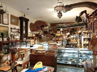 """Antique Collectible Estate Buy Out Store """"Inventory"""" business wholesale Lot"""