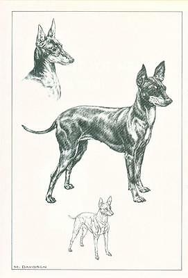 Art Dog Print Black and Tan English Toy Terrier by Davidson