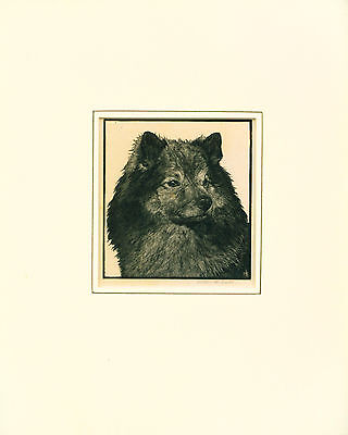 Etching Print 1930's Named Keeshond Dog SIGNED Scarce by Helen R. Lock ANTIQUE