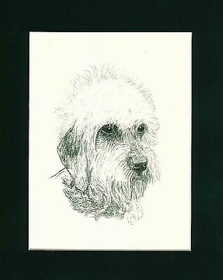 Dog Print 1935 Dandie Dinmont Terrier by Francis Wardle VINTAGE