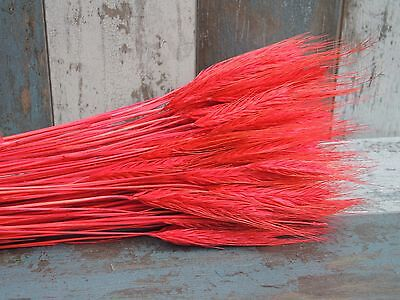 """Dried Wheat/rye 100 Stems For Flowers Arranging Ready To Use Red Bouquet 20"""""""