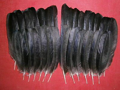 "30 Crow Wing Feathers 5"" - 8"" - Crafting, Native American Art"