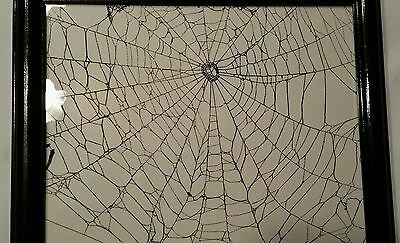 Black Web Spider Art Real Genuine Spider Web Ready for Halloween in Wooden Frame