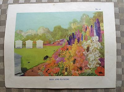 Vintage Macmillan School Poster Bees And Flowers 1950's