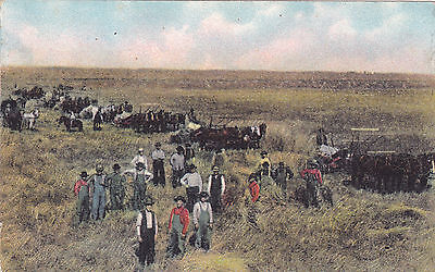 Vintage Farmers. Teams of Horses. Haying. Post Card