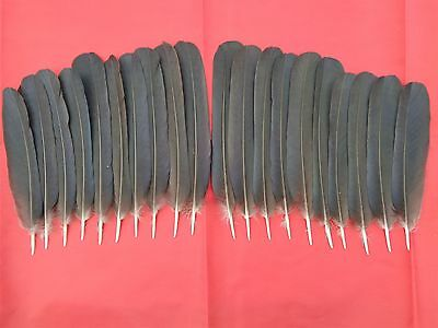 "20 Crow Tail Feathers 5.5"" - 7.5"" - Crafting, Native American Art"