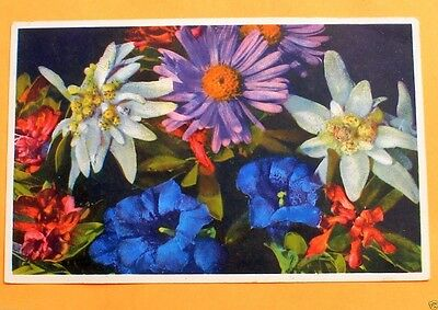 German Art postcard Alpine White Edelweiss, Rhododendron, Aster Flower Painting