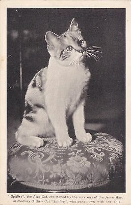 """""""Spitfire"""" the Cat, christened by the survivors of the """"HMS JERVIS BAY"""" , 20-30s"""