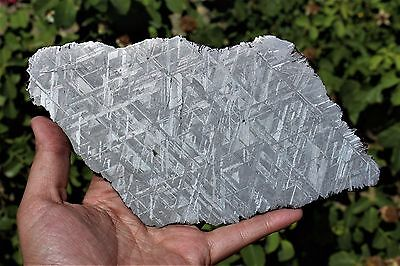 Muonionalusta meteorite etched full slice 318.9 grams!