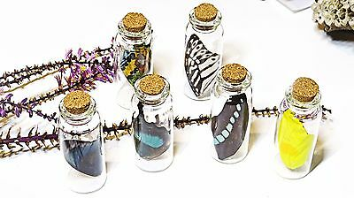 Real butterfly wings insect entomology lepidoptera specimen in a bottle BB