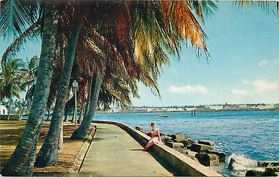 Panama Canal Zone palm-lined promenades along the Atlantic Coast of Colon 1975