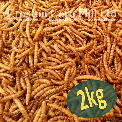 2kg Wild Bird Mealworms *Premium Quality* - Poultry Chicken & Hedgehog Mealworm