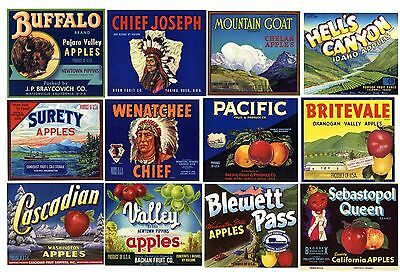 Collection of 12 Different Apple Box Label, **ORIGINAL FRUIT CRATE LABELS**
