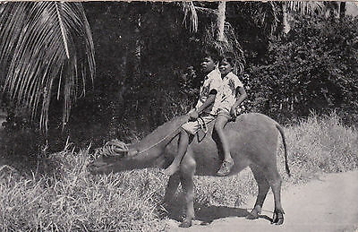 GUAM , 00-10s; Two boys ride a Carabao , GUAM's Beast of Burden