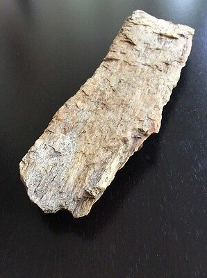 """Petrified Wood 8"""" By 2-3/4"""" By 1"""" • $3.00"""