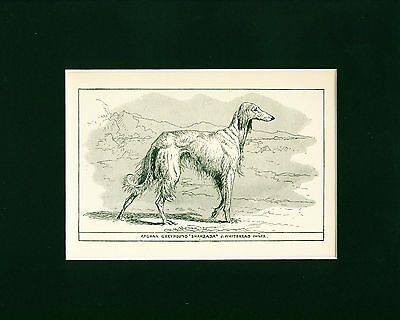 Dog Art Print 1900 Saluki Dog Afghan Greyhound ANTIQUE