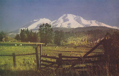 Pasture, Cattle. Mount Shasta, California. Mike Roberts Color Production.