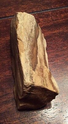 "Petrified Wood 3-12"" By 1-1/2"" By 1-1/4"""